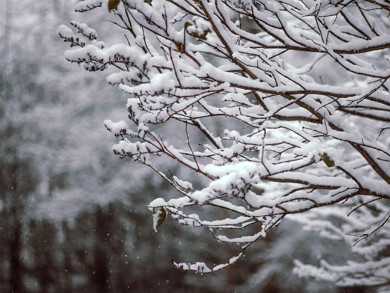 Lambasingi snow