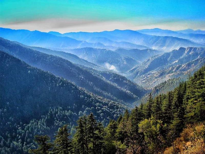 green valley kufri