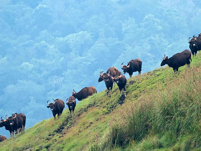idukki wildlife sanctuary